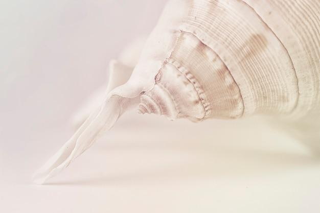 Piękna beżowa muszla na białym tle w pastelowym kolorze. fotografia artystyczna. selektywne skupienie. makro.