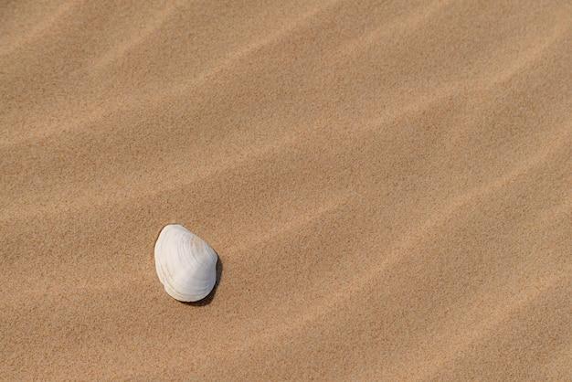 Piękna biała muszla w piasku w słoneczny dzień na plaży.