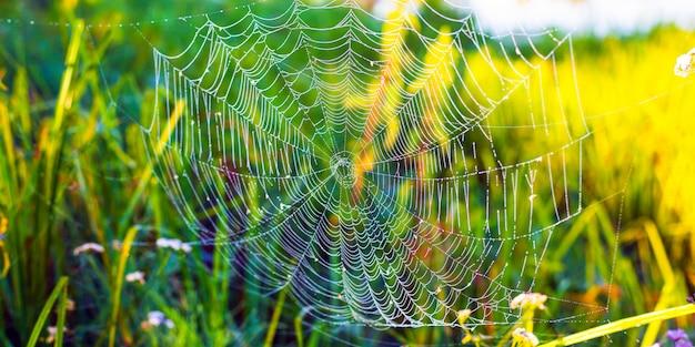 Piękna biała pająk sieć na zielonej trawy tle.