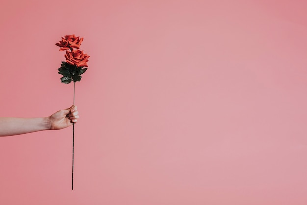 Piękna czerwona róża na walentynki