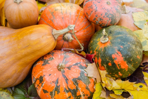 Piękna dekoracja dyni i liści jesienią na halloween.