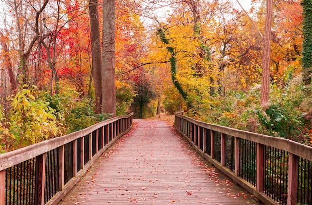 Piękna drewniana droga idzie zapierającymi dech w piersiach kolorowymi drzewami w lesie