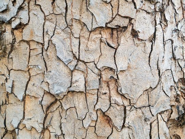Piękna drewniana kora