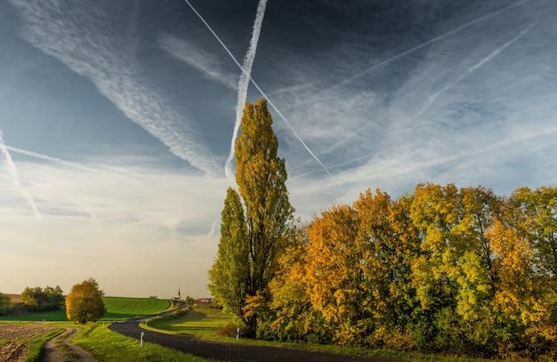 Piękna droga idzie przez dużych drzew na trawiastym polu z chmurnym niebem