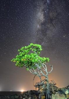 Piękna droga mleczna na drzewie namorzynowym