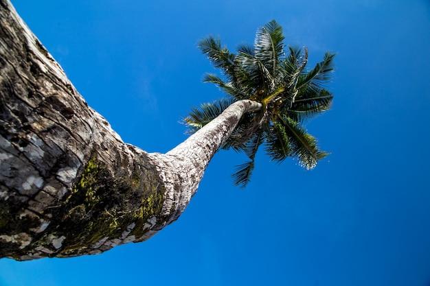 Piękna duża palma nad oceanem, pojęcie wypoczynku i podróży