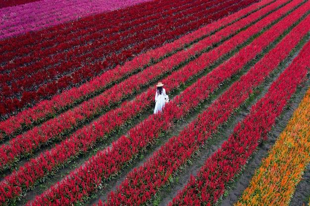Piękna dziewczyna w białej sukni podróżuje po polach kwiatowych celosia w chiang mai