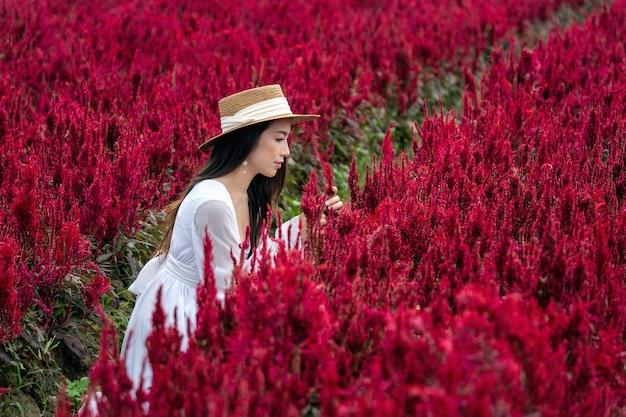 Piękna dziewczyna w białej sukni siedzi na polach kwiatowych celosia w chiang mai