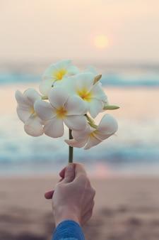 Piękna gałąź z kwiatami plumeria w kobiecej dłoni