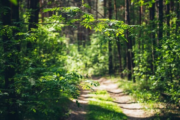 Piękna gałąź z żywymi zielonymi liśćmi na słonecznym tle bokeh zieleni