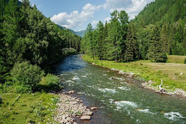 Piękna górska rzeczka z czystą wodą w lesie wśród bogatej flory w słoneczny dzień.