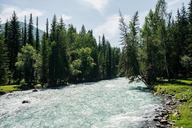 Piękna górska rzeka z czystą wodą w lesie wśród bujnej zieleni w słoneczny dzień.