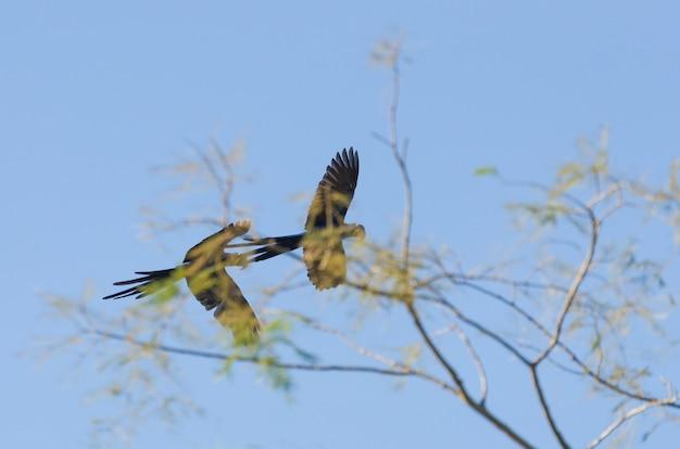 Piękna hiacyntowa ara na brazylijskich terenach podmokłych