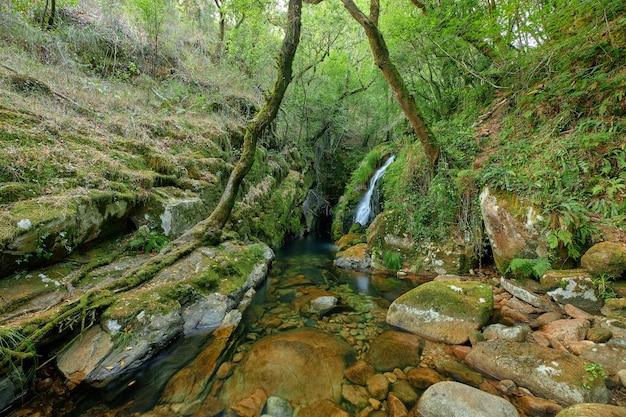 Piękna i niewielka rzeka tworząca mały wodospad między drzewami i skałami.