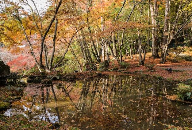 Piękna jesień barwiąca opuszcza ogród w daigo-ji świątyni, kyoto, japonia
