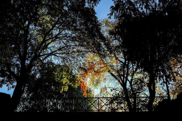 Piękna jesienna sceneria w parku giardini pubblici indro montanelli w mediolanie we włoszech
