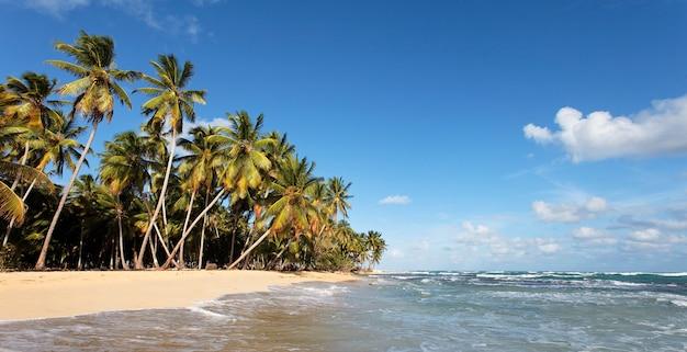 Piękna karaibska plaża n z palmami i błękitnym niebem
