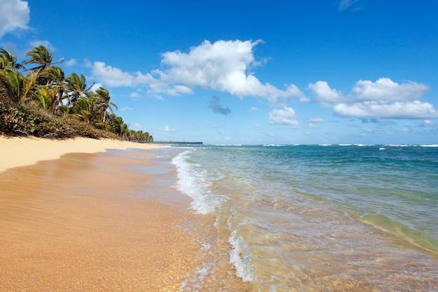Piękna karaibska plaża z palmami i niebem