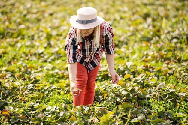 Piękna kobieta je truskawkę podczas zbierania truskawek na farmie