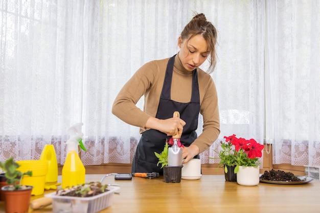 Piękna kobieta kwiaciarnia przesadzająca sadzonkę kwitnących petunii z plastikowej do ceramicznej doniczki