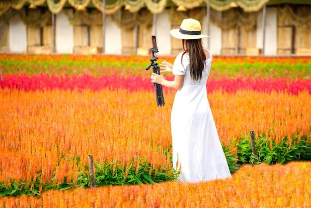Piękna kobieta robi zdjęcie pięknego ogrodu z czerwonymi kwiatami celosii w i love flower farm