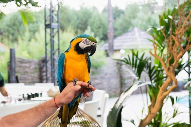 Piękna kolorowa papuga siedzi na męskiej dłoni