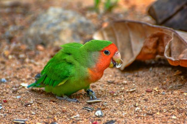 Piękna kolorowa papuga