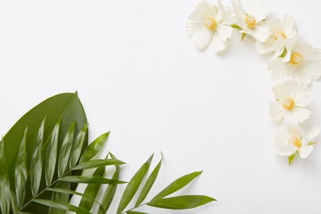 Piękna kompozycja zieleni i małe białe kwiaty na białym tle z pustą przestrzenią pośrodku