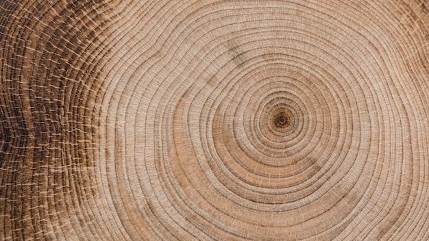 Piękna koncepcja drewna makro