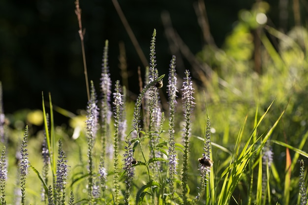 Piękna łąka z dzikimi kwiatami i pszczołami.