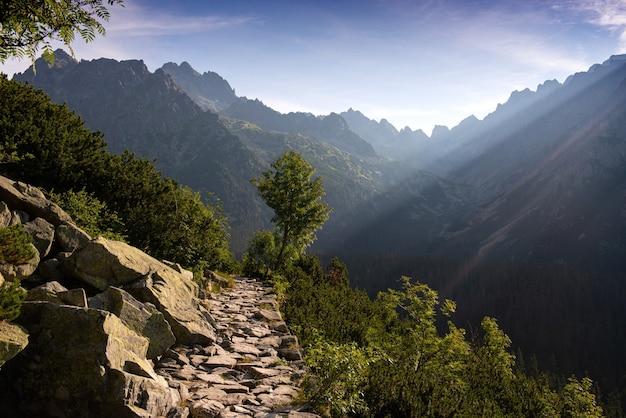 Piękna leśna ścieżka górska w poranek latem