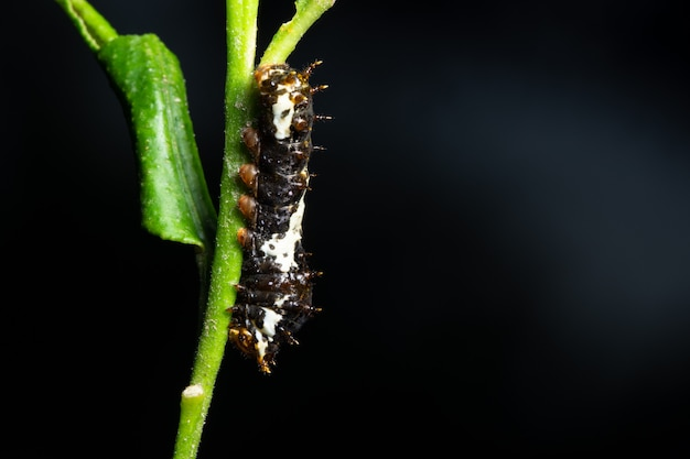Piękna makro- dżdżownica na roślinie