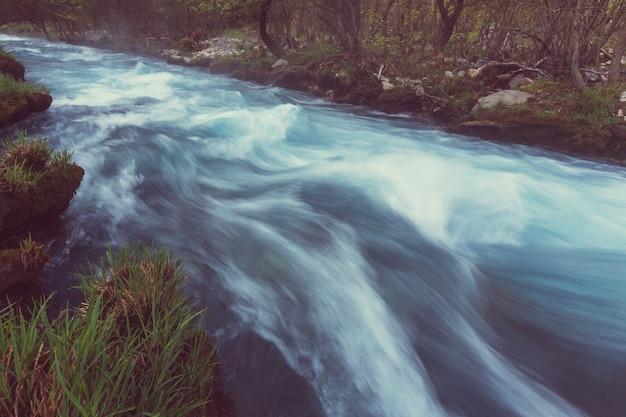 Piękna mała rzeka w lesie