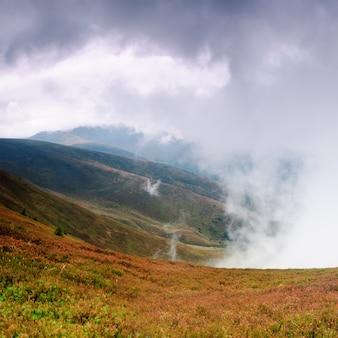 Piękna mgła i suche krzewy czarnych jagód wysoko w karpatach