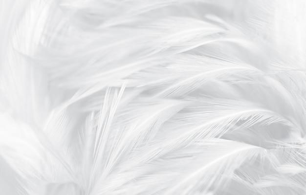 Piękna miękkość białych i szarych piór w stylu vintage tekstury