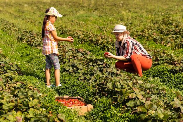 Piękna młoda kaukaska matka z córką zbierają truskawki na polu