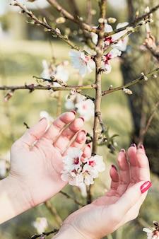 Piękna młoda kobieta wręcza wokoło migdałowych kwiatów w drzewie z zielonym tłem liście i gałąź w wiośnie