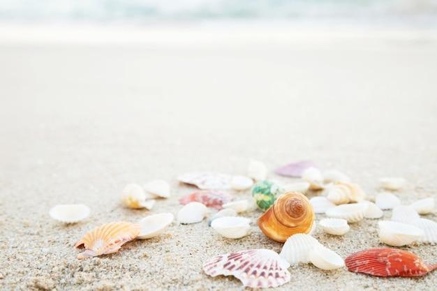 Piękna Muszla Na Piasku Z Falą Na Plaży Nad Morzem W świetle Słońca Pod Zachodem Słońca. Piękna Muszla Na Piasku Z Falą Na Plaży Nad Morzem W świetle Słońca Pod Zachodem Słońca. Premium Zdjęcia