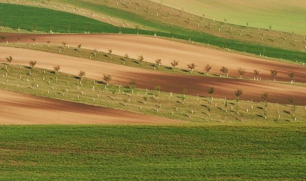 Piękna natura. linia świeżych drzew na zielonych polach uprawnych w ciągu dnia.