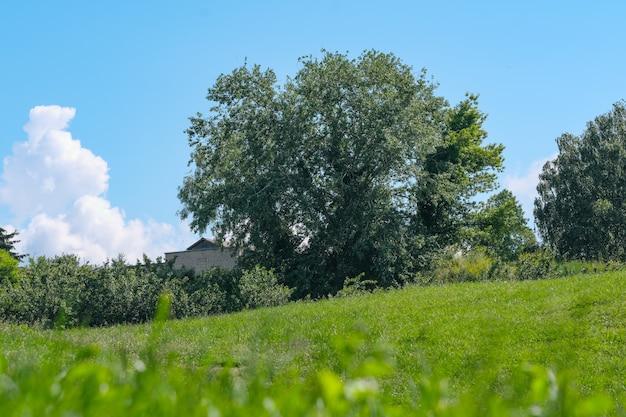 Piękna naturalna roślinność pagórkowaty krajobraz w słoneczny letni dzień