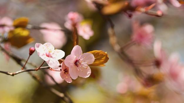Piękna natury scena z kwitnącym drzewem i słońcem