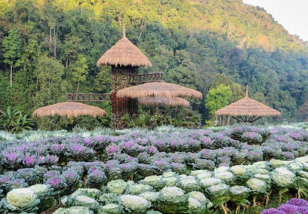 Piękna ozdobna kapusta i kwitnąca kale ogrodowa scena