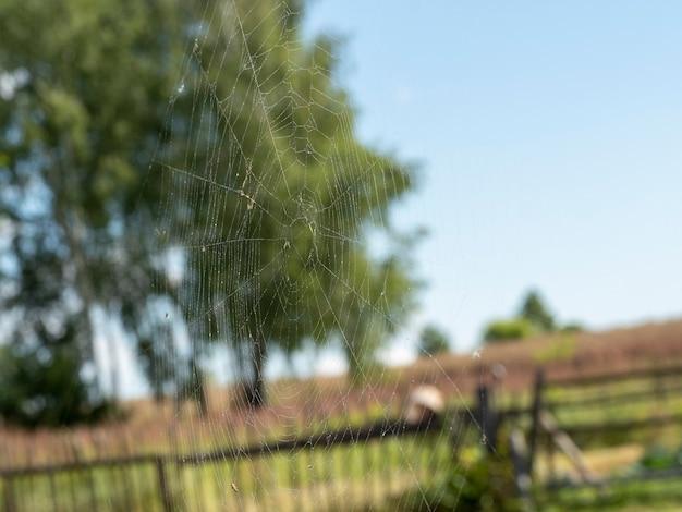 Piękna pajęczyna z bliska krople wody. w tle rozmazany letni krajobraz