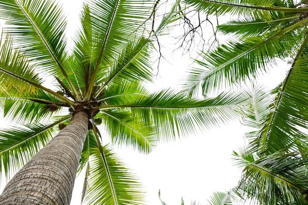 Piękna palma