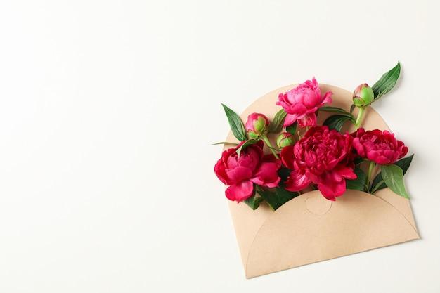 Piękna peonia kwitnie w kopercie na białym tle