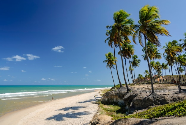 Piękna plaża conde w pobliżu joao pessoa paraiba brazylia