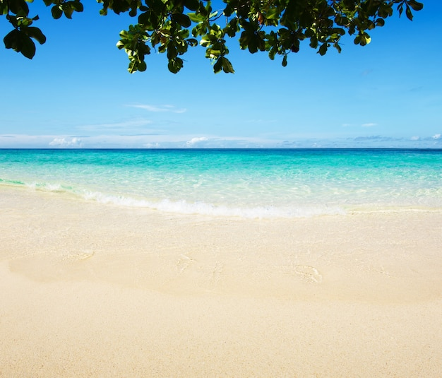 Piękna plaża i tropikalne morze