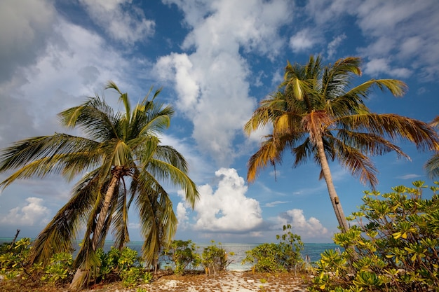 Piękna plaża na malediwach. naturalnie piękne.