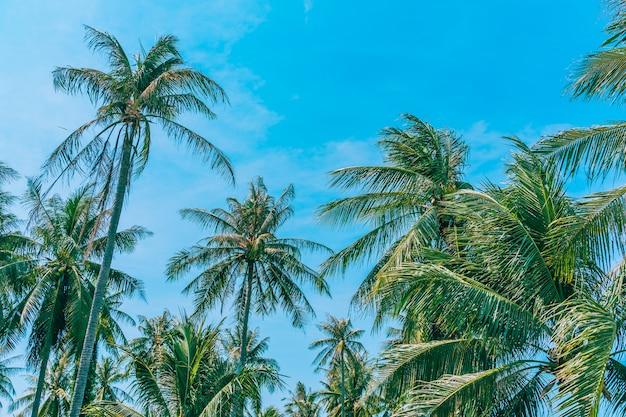 Piękna plenerowa natura z kokosowym drzewkiem palmowym i liściem na niebieskim niebie