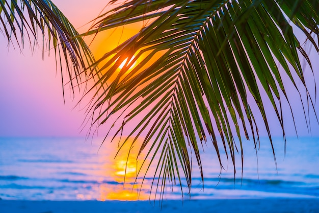 Piękna plenerowa natura z kokosowym liściem z wschodu słońca lub zmierzchu czasem